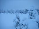 Vinterstemning foran hytten (Foto: Anja Junker)