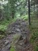 Skog og sti (Foto: Grete Amundsen)