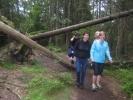 Vi undret oss på om det ikke kunne ryddes litt selv om skogen var vernet... (Fot