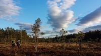 Kvelssol over myra vår (Foto: Katrin Wiegmann)