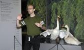 Zoolog Torfinn Ørmen forteller om homoseksuelle svaner. Foto: Rine G. Carlsen