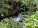 Vekster og vann (Foto: Grete Amundsen)