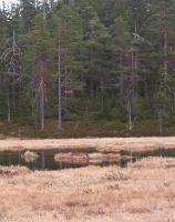 Detalj fra Karlshaug naturreservat. (Foto: Nina Didriksen)